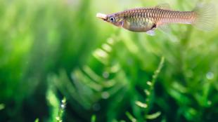 A leggyakoribb halbetegségek és tüneteik