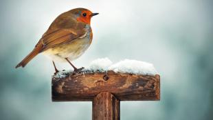 Milyen fajta madarakkal találkozhatunk a kertünkben télen?