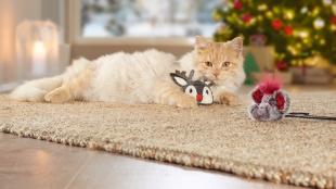 Hasznos ajándékok cicák számára