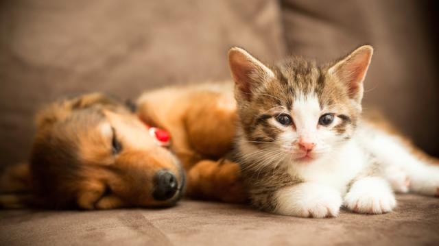 Új családtag – cicák és kutyák összeszoktatása