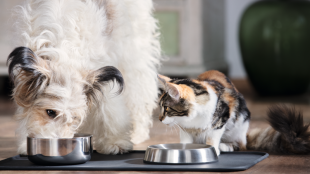 Ehet-e a cicánk kutyaeledelt?