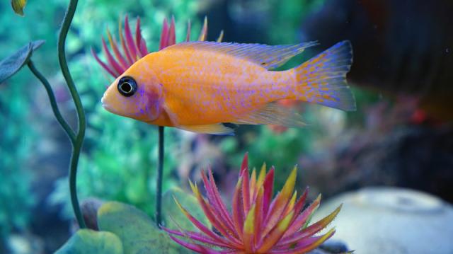 Biztonságos dekorációk akváriumokba