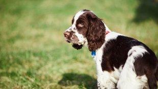 Mit tegyünk, ha kutyusunkat támadás érte?