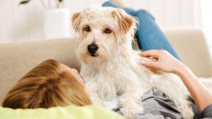 Honnan tudhatom, hogy a kutyám szeparációs stresszben szenved?