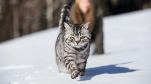 Mi tegyünk, ha túlsúlyos a cicánk?