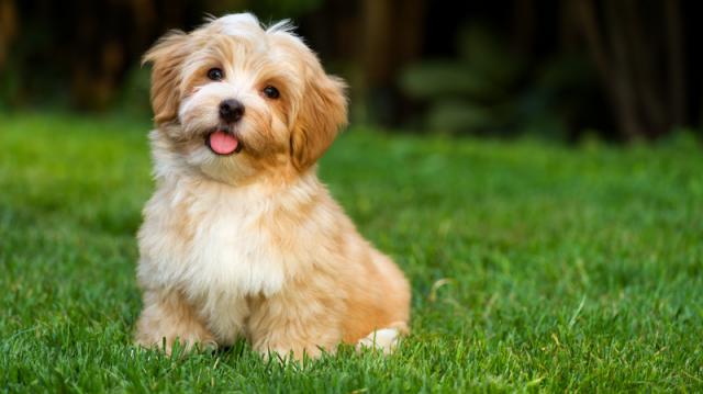 Szüntelen vakarózás – mit tehetünk, ha kutyusunk allergiás?