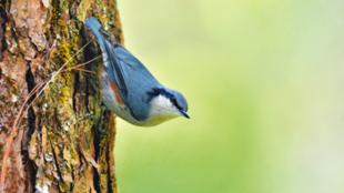 Madáritató és madárfürdető – a kert fontos kiegészítői