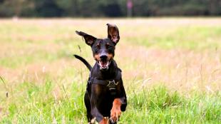 Túrázás kutyával – mire kell odafigyelnünk?