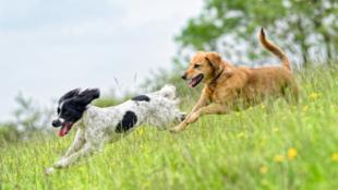 Tavaszi immunerősítés kutyusoknak