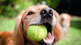 5+1 kerti játék kutyáknak
