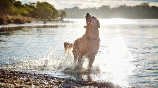 Tippek nagy mozgásigényű kutyusok számára