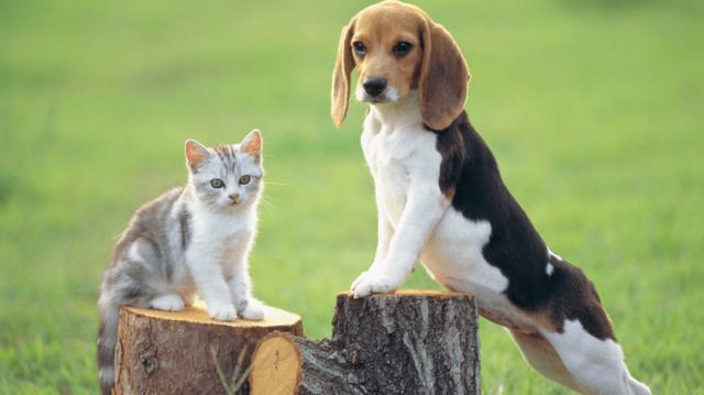 Mire ügyeljünk a cica kiszoktatásánál?