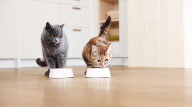 6+1 tipp a cicák összeszoktatásához