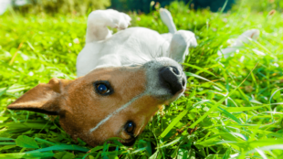 Kutyafürdetési útmutató a meleg napokra