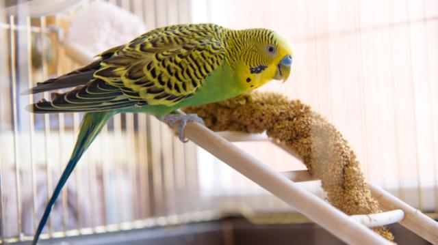 A 3 legfinomabb nyári nasi papagájoknak