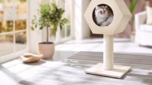 Lakásban tartott cicák 5 alapfelszerelése