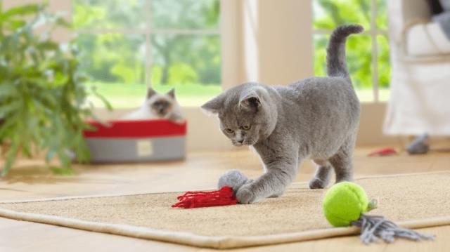Nyári játékötletek cicáknak
