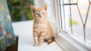 Találtam egy kiscicát! Mit tegyek?