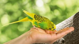 Mi alapján válasszunk papagájt?