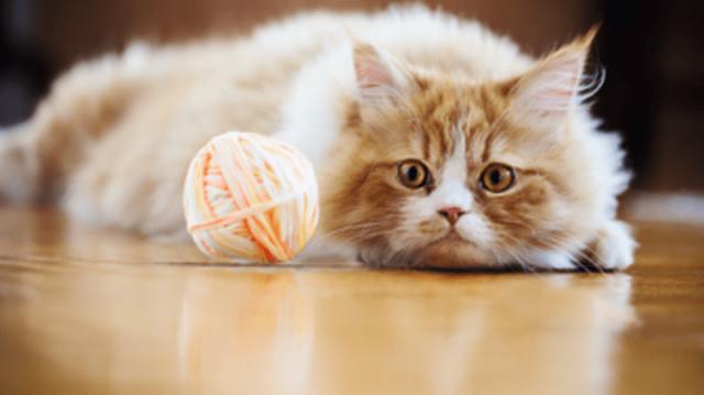 Tippek szőrcsomók ellen cicáknak
