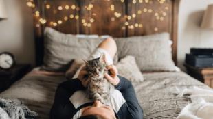 Cicawellness – kényeztető tippek macskáknak
