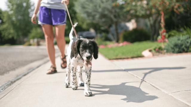 Óvjuk a tappancsokat! – Kutyasétáltatási tippek nyárra