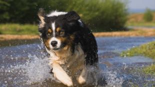 Kutyával a tóparton – mire kell figyelnünk?