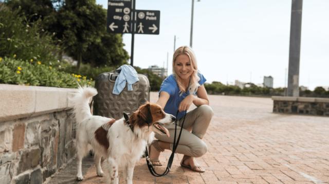 Tömegközlekedési kisokos kutyagazdiknak