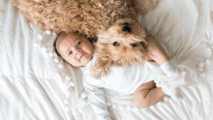 Kis kedvencek és kisgyerekek – mire érdemes odafigyelnünk?
