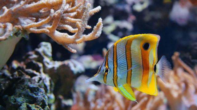 A sósvízi akvárium – szuper kihívás haladó akvaristáknak!