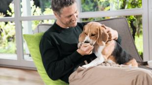 Nem tudsz eleget foglalkozni a kutyáddal? Tippek a boldog együttéléshez