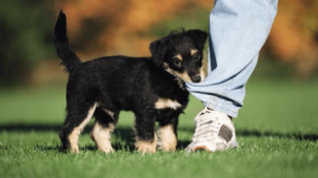 Serdülőkor a kutyánál – így maradjunk nyugodtak