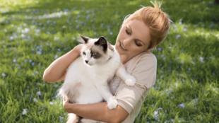 Nem boldogulsz a cicáddal? Íme néhány hasznos tipp