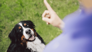 A kutya szocializálása – megfelelő kezdet a közös élethez