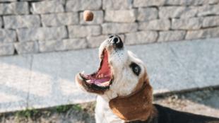 Praktikák érzékeny gyomrú kutyák etetéséhez